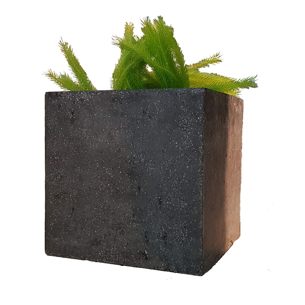 Pflanzteil Plantana small